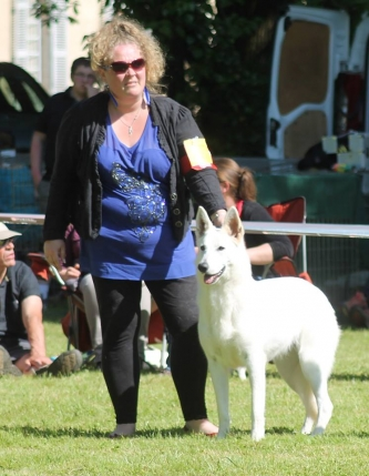Born to Win Warrior Arrow in Dog Show in France Best of Breed