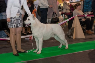 23.03.14 BTWW Super from Latvian Dog Show in Riga