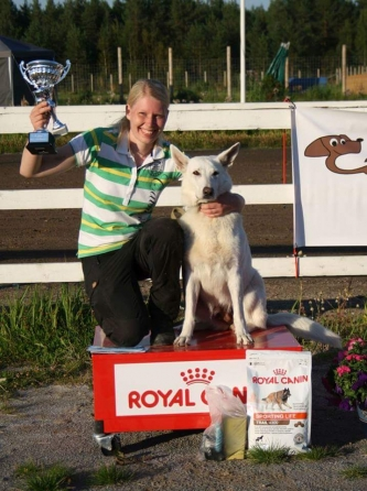 Born to Win White Oodi is The Finnish Champion of White Shepherd Dogs 2015 in Search
