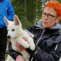 White Swiss Shepherd Dog Puppy Born to Win Warrior Arja in Finland