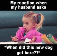 My reaction when my husband asks When did this new dog get here
