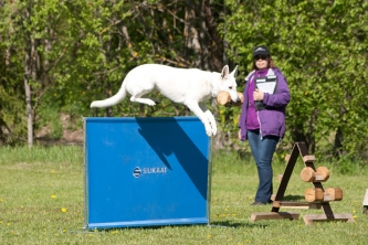 White Swiss Shepherd Born to Win White Target Obedience Competition 1 place